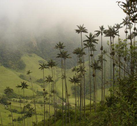 LAS 10 MEJORES RUTAS PARA PRACTICAR SENDERISMO ECOLOGICO EN COLOMBIA