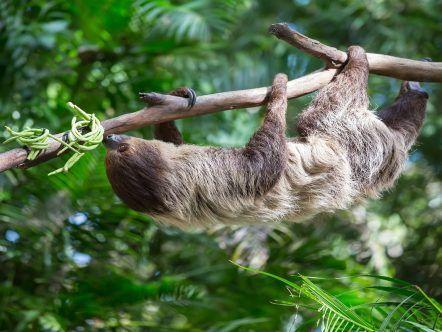 RESERVA NATURAL CERCA VIVA | AMAZONAS