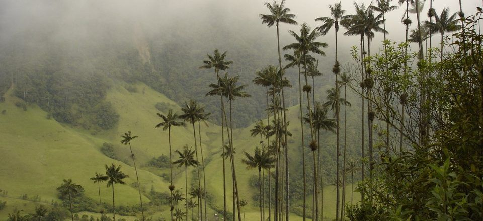 THE 10 BEST ROUTES TO PRACTICE ECOLOGICAL HIKING IN COLOMBIA
