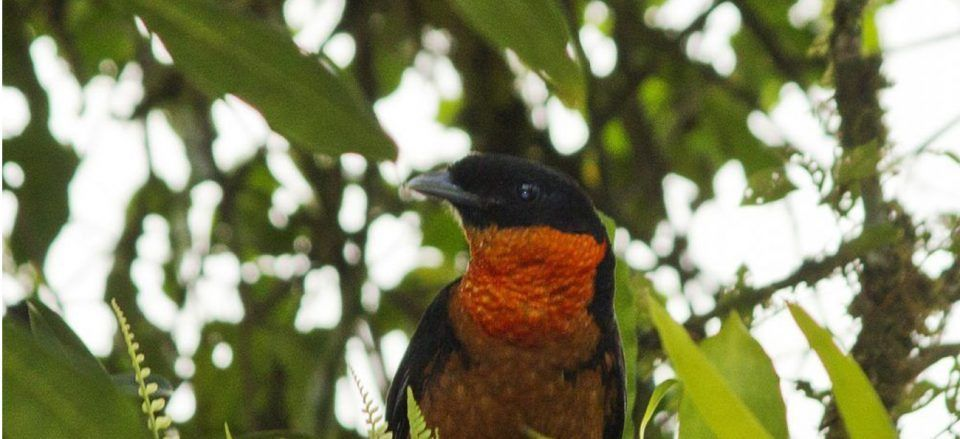 BIRDS YOU CAN ONLY SEE IN COLOMBIA