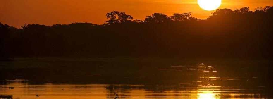 AMAZONAS DE NOCHE
