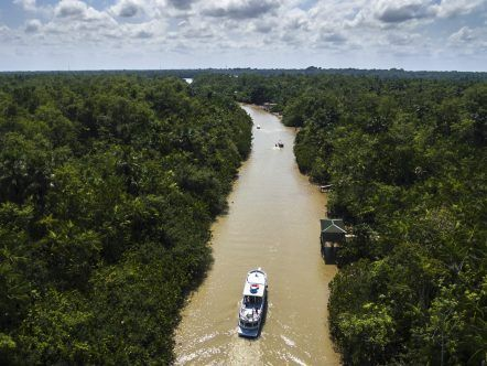 AMAZONAS TARDE